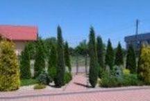 Garden Design / Projektowanie ogrodów  Budowa ogrodów