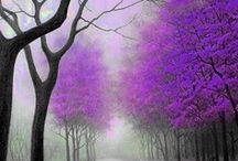 Color - Purple