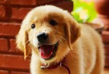 Sevimli hayvanlar / Çoooooooook ama çoook tatlı hayvanlar
