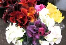 Cala Liliy Flowers / Deep purple, orange, yellow, pink and whir Cala Lilly flowers.
