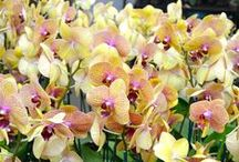 Orchids / Stunning Orchids in every color of the rainbow!