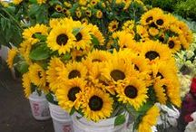 Sunflowers / Sunflowers at The Original Los Angeles Flower Market