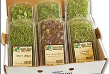 Chefs using Cahaba Club Micro Greens / Cahaba Club loves the uses of #Microgreens on these plates @cahabaclubherbs