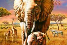 Zvieratá sveta / exotické zvieratká - ZOO