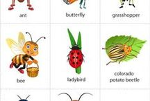 Prekvapenie v tráve - insect / hmyz