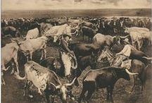 The 101 Ranch and Burroum Ranch, Del Rio, Texas / The 101 Ranch and Burroum Ranch, Del Rio, Texas collection is comprised of 15 photographic prints, held by the DeGolyer Library, Southern Methodist University. The collection documents life on the famous 101 Ranch and Burroum Ranch, and contains portrait photographs of Molly Clark and Elizabeth and May Burroum, as well as rodeo and round up scenes, longhorns, cowboys and cowgirls.