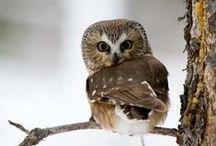 Owl ^-^