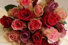 Flowers:Roses