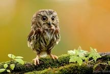 Birds:Owls