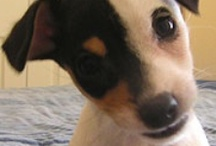 JRT and Cute Animals