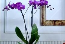 Orquideas / Las orquideas son las plantas más agradecidas en decoración. Un regalo perfecto para cualquier hogar con estilo.