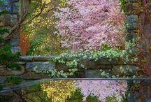 garden / jardins et terrasses