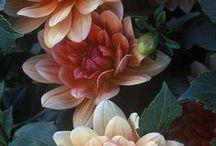 All Things Floral / Beautiful gardens, flora, botanical art