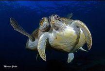 Animal - sous les mers