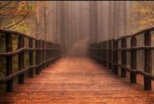 Paths / by Mary McGurn