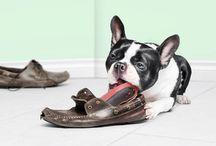 Schuhen & Schuhen