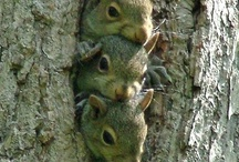 Squirrels / by Alexandrea Weis