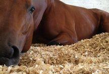 Horses•••