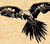VECTOR BIRDS / birds, feathers