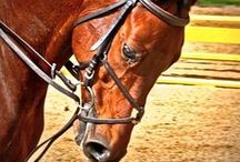 A Passion For HORSES ♥ / The wind of heaven is that which blows between a horse's ears.  ~Arabian Proverb