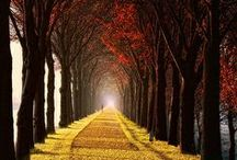 The Wonderful Colors of Autumn / by Michelle H