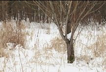 Winter   Hiver / by Voir Ci-Contre