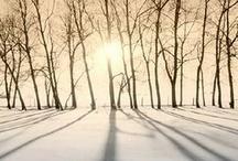 Winter Wonderland / by Michelle H