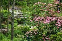 Beautiful Native Plant Gardens