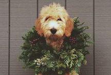 'Tis The Season / Chic holiday inspo to celebrate the season in style