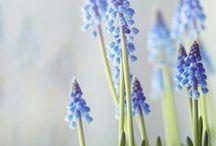 Spring   Printemps / by Voir Ci-Contre