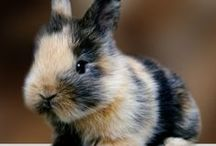 Adorable Animals and Pet Stuff