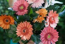 Paper Flowers/Bouquets