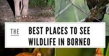 Wildlife Travel / This board is dedicated to wildlife watching trips around the world. Here you will find suggested itineraries, destination guides and inspiration for seeing wildlife in its natural habitat