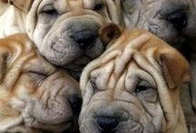 Wonderful World Of Dogs / by Mary Grain