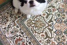 GENKI / my dog
