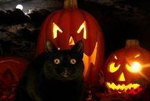 Halloweeenie / by Rosalyn