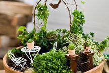 Terrarium / Terrarium ve bahçe