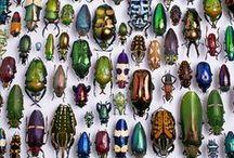 Murdering Gods Creatures (Entomology + Arachnology)