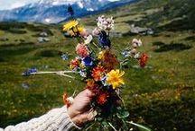 green thumb / flowers, bouquets, plants