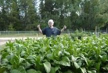 How To Raise Your Own Organic Tobacco! / How to Germinate, Plant, Grow, Harvest, Hang and Cure Your Own Tobacco! / by Larry Hall
