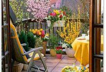 Plants & Terraces / Plants Terraces and balconies