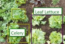 Organic Gardening Winter Time Plots / What to grow during the winter