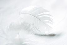 ღ˛° 。* Colour~White *˚ .ღ / by Sandra Bing