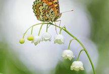 Nature - Spring is Here - Flowers, Birds& Butterflies / We have to be like the lily of the valley that curve but never break. / by Maria Helena Rodrigues Penteado
