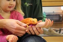 Our Old Shop - Evolution Reptiles, Oxford- We have moved! / A few photos of our previous shop Evolution Reptiles, Based in Oxford, customers and staff!  We have now moved to Kidlington