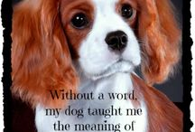 Dog Quotes and Poems ❤