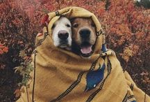 Dogs I Want To Be Friends With / Dogs are the greatest. Here are some I wish I knew in real life.
