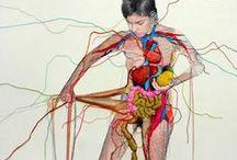 Magic Realist Anatomy