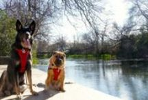 Tall Tails Adventures / Add one of these dog-friendly destinations to your vacation bucket list.