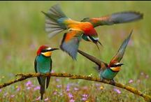 Ptaki / Piękne zdjęcia ptaków
